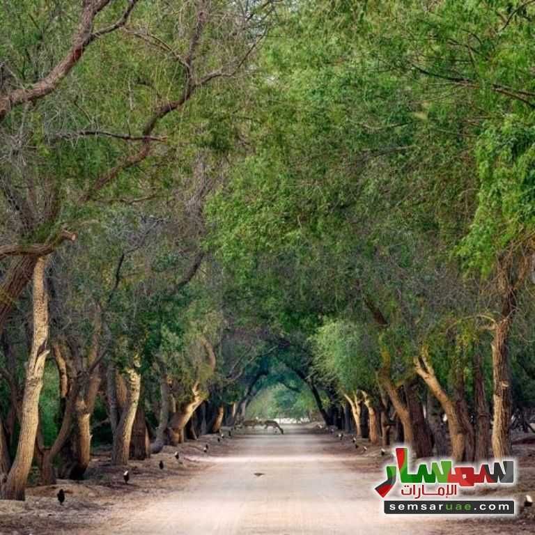 Ad Photo: Farm 80000 sqft in Ghantoot  Abu Dhabi