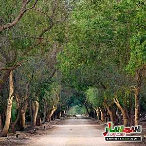 Land 7,000 sqft For Sale Saadiyat Island Abu Dhabi - 2