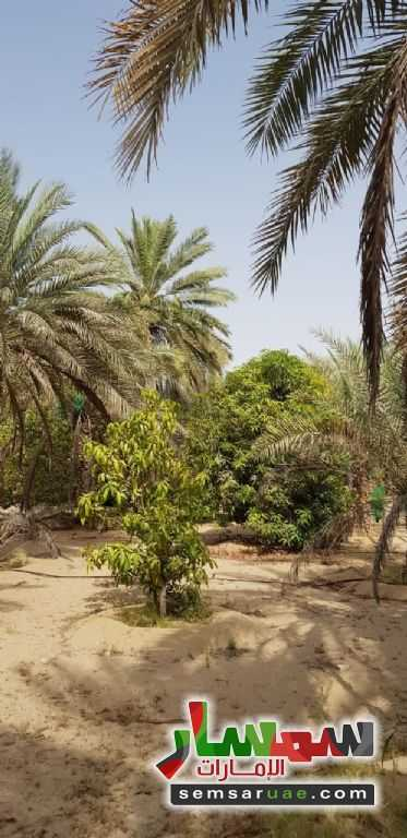 Ad Photo: Farm 300000 sqft in Al Bahia  Abu Dhabi