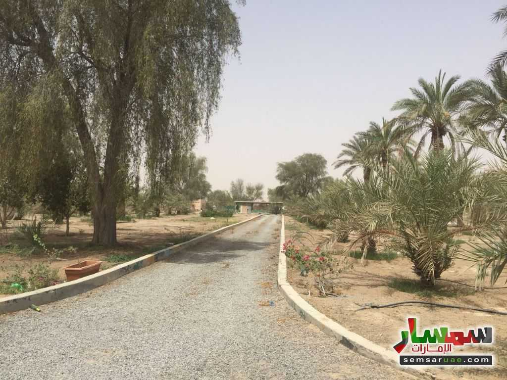 Photo 1 - Land 150000 sqft For Sale Ras Al Khaimah Creek Ras Al Khaimah
