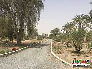 Ad Photo: Farm 150000 sqft in Ras Al Khaimah Creek  Ras Al Khaimah