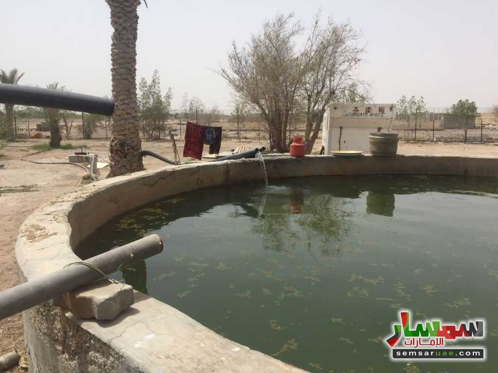 Photo 3 - Land 150000 sqft For Sale Ras Al Khaimah Creek Ras Al Khaimah