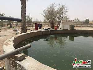 Land 150000 sqft For Sale Ras Al Khaimah Creek Ras Al Khaimah - 3