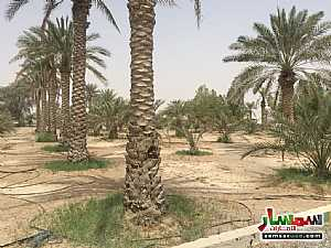 Land 150000 sqft For Sale Ras Al Khaimah Creek Ras Al Khaimah - 4