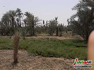Ad Photo: Farm 80000 sqft in City Downtown  Ras Al Khaimah